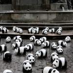 panda malaysia?