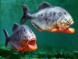 ikan dan umpan