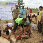 Tempahan qurban sempena musim raya haji 2013 – eQurban.com