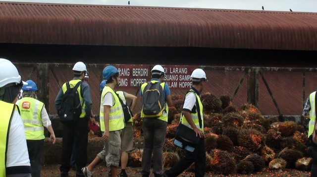 seda malaysia visit site - kelapa sawit