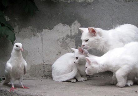 putih-putih melati