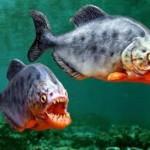 Kalau umpan menarik dan sedap, mustahil ikan tak nak makan, kan?