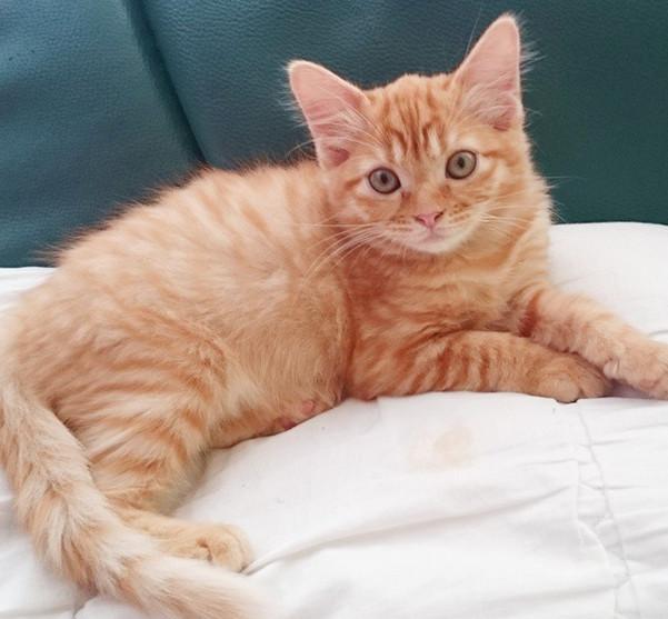 carrot - kucing kak jie