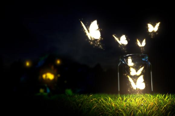 rama-rama malam yang cantik